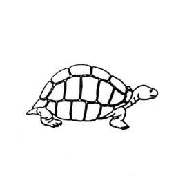 Kids Schildkröte