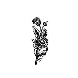 Blume 03