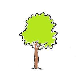 Baum 05