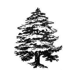 Baum 08
