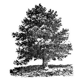 Baum 06