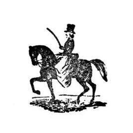 Pferde Dressur