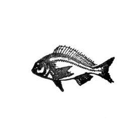 Fisch 02 klein