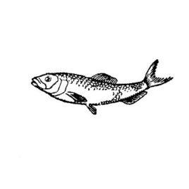 Fisch 04