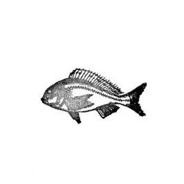 Fisch 02 gross