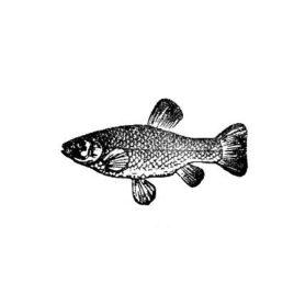 Fisch 05