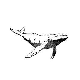 Wal 01 gross