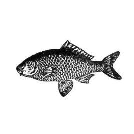 Fisch 07