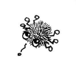 Jux-Käfer