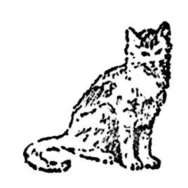 Katze 09