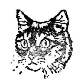 Katze 12 Tiegerkopf