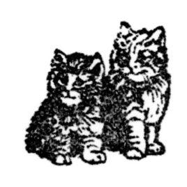 Katze 11 Tiegerlis