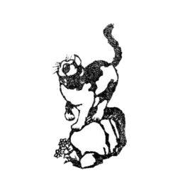 Katze auf Stein