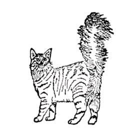Katze 04 links