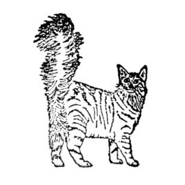 Katze 04 rechts