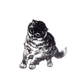 Katze 06
