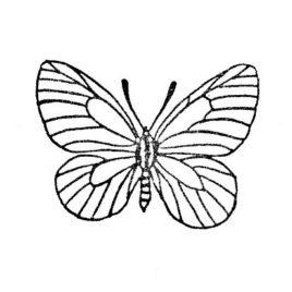 Schmetterling 01 gross