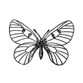 Schmetterling 02 gross