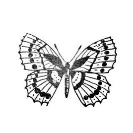 Schmetterling 03 gross