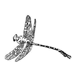 Libelle gross