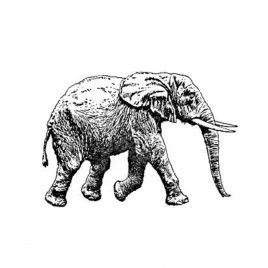 Elefant 03