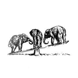 Elefant 04