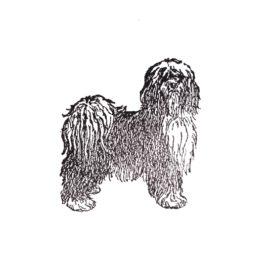 Hund 08