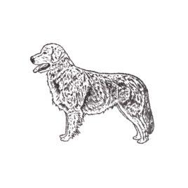 Hund 09