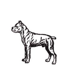 Hund 12