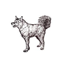 Hund 14