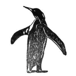 Pinguin links