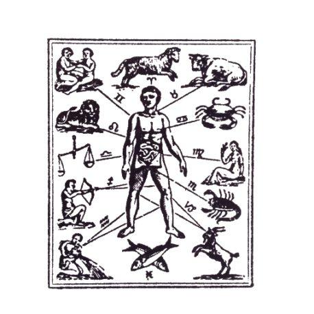 Sternzeichen_Menschliche-Organe