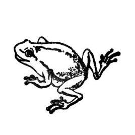Frosch 01