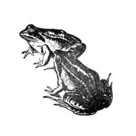 Frosch 04