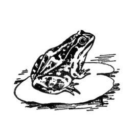 Frosch 06