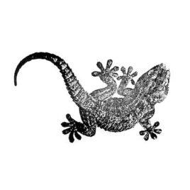 Gecko 02
