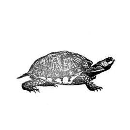 Schildkröte 06