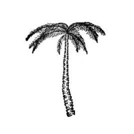 Palme 01 rechts