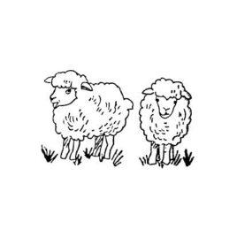 Schafe klein