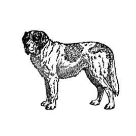 Hund 13