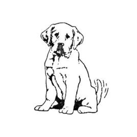Hund 05 gross