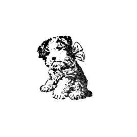 Hundi 01