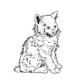 Katze 08 – Angora