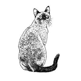 Katze 02 – Siam