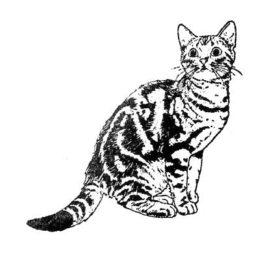 Katze 03 5×5