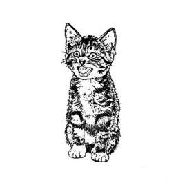 Katze 07 – Tigerli