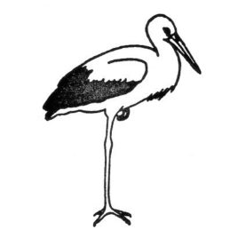 Storch 01