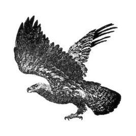 Adler gross