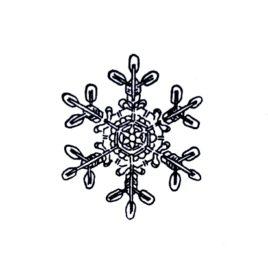 Schneestern 01 mittel