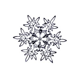 Schneestern 03 mittel